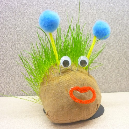 A funny-looking Chia Pet Stevie says looks like his mom.