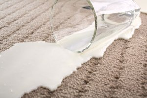 Milk spilled on carpet. Spilled milk.